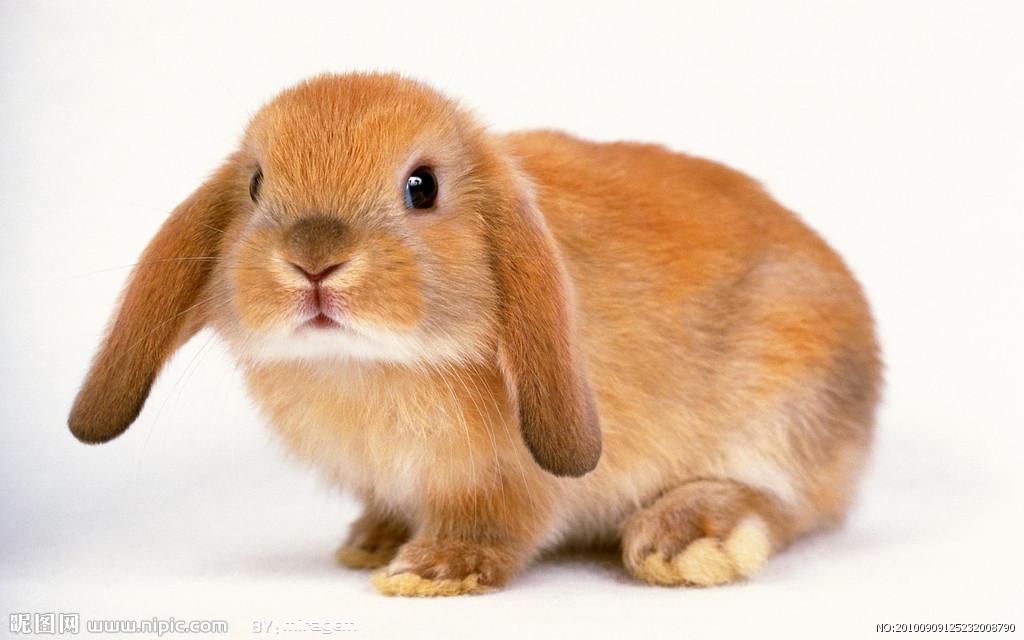 手绘萌兔子